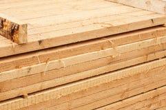 Pine limber limber Royalty Free Stock Photo