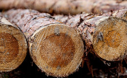 Pine log background Royalty Free Stock Photos