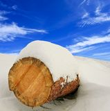 Pine log in a snow Royalty Free Stock Image
