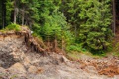 Pine logging in the Carpathian mountains. Ukraine stock images