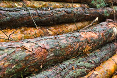 Pine logs Royalty Free Stock Photos
