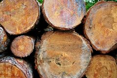Pine logs. Cut and ready for working in the sawmill and wood for firewood stock image