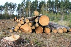 Pine logs. Timber industry, logging Royalty Free Stock Image