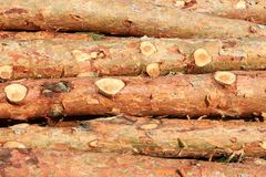 Pine logs Royalty Free Stock Image