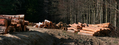 Pine logs Royalty Free Stock Photography