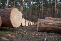Pine Logs Royalty Free Stock Photos