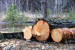 Pine logs Stock Photography