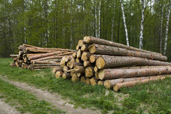 Pine logs. For construction of the house Royalty Free Stock Image