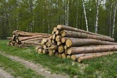 Pine logs royalty free stock image