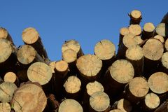 Pine logs against blue sky royalty free stock images
