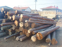 Pine Logs Background Royalty Free Stock Photography