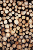 Pine logs background Royalty Free Stock Photo