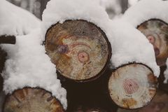 Pine logs background. Timber industry. Tree trunks texture and background for designers. Pine logs in winter forest. Pine logs background. Timber industry. Tree Stock Photos