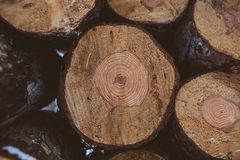 Pine logs background. Timber industry. Tree trunks texture and background for designers. Pine logs in winter forest. Pine logs background. Timber industry. Tree Royalty Free Stock Photo