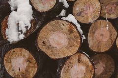 Pine logs background. Timber industry. Tree trunks texture and background for designers. Pine logs in winter forest. Pine logs background. Timber industry. Tree Royalty Free Stock Image