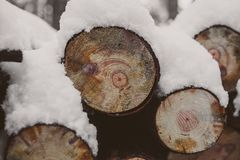 Pine logs background. Timber industry. Tree trunks texture and background for designers. Pine logs in winter forest. Stock Photography