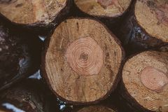 Pine logs background. Timber industry. Tree trunks texture and background for designers. Pine logs in winter forest. Pine logs background. Timber industry. Tree Stock Photo