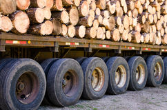Pine logs on flatbed trailer Royalty Free Stock Images