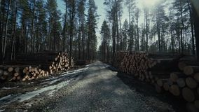 Pine logs forest boards lumberjack feller loggers work forest road. Pine logs forest axeman lumberer spring road life, above, chop, age, section, cross, damage stock video