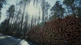 Pine logs forest boards lumberjack feller loggers work forest road. Pine logs forest axeman lumberer spring road life, above, chop, age, section, cross, damage stock video footage