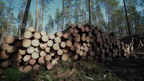 Pine logs forest boards lumberjack feller loggers work forest road. Pine logs forest axeman lumberer spring road life, above, chop, age, section, cross, damage stock footage