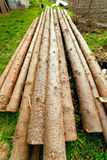 Pine logs on grass Royalty Free Stock Image