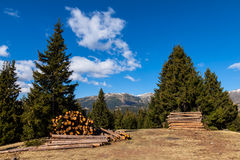 Pine logs Stock Image