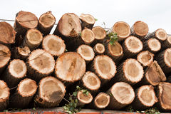 Pine logs loaded on to truck Stock Photo