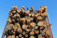 Pine Logs on Logging Semi Trailer Royalty Free Stock Images