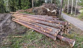 Pine logs. Next to road in Finland Royalty Free Stock Photo