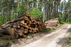 Pine logs are put in stacks at the forest road. Logging Royalty Free Stock Image