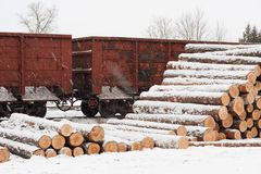 Pine logs on the railroad platform in winter Stock Photo