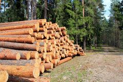 Pine Logs in Spring Forest. Pine logs stacked by a spring forest road stock images