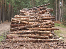 Pine logs in a stack Stock Photos
