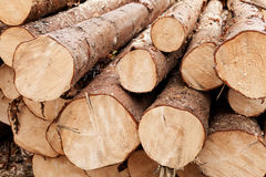 Pine logs stacked Stock Images