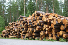 Pine Logs Stacked by the Roadside. For collection, Sweden Royalty Free Stock Image