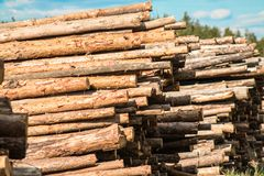 Pine logs in stacks, blue sky, sunny spring day. Royalty Free Stock Image
