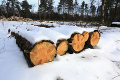 Pine logs under snow Royalty Free Stock Photo
