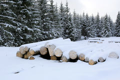 Pine logs under snow Royalty Free Stock Images