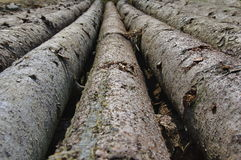 Pine logs. Pine wood logs in the forest. Forest business Stock Photos