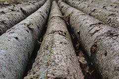 Pine logs Stock Photos