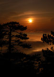 Pine and Moon. Pine silhouette, Moon and night clouds Stock Photography