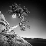 Pine and moon. Monochrome colors stock images