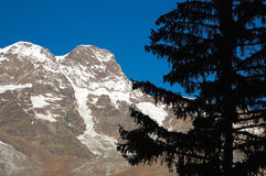 Pine mountain. Pine silhouette, in background the south side of Monte Rosa massif (4634mt), Alagna, Val Sesia, west Alps, Italy Royalty Free Stock Photos
