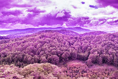 Pine mountain forest surreal view - lush purple texture. Apocalyptic lush purple floral texture Stock Image