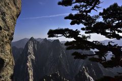 The pine and mountain Royalty Free Stock Image