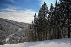 Pine on a mountain slope Stock Images