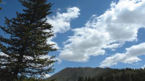 Pine Mountain wind sky Altai. Pine swaying in the wind against the background of a cloudy blue sky, the Altai Mountains, Siberia, Russia. Live sound stock video