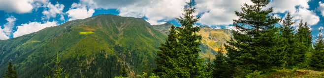 Pine and mountains Stock Photo