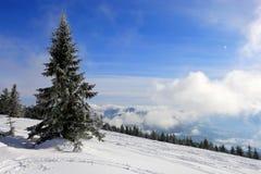 Pine in mountains Stock Photos